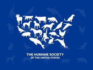 Sociedad Humana Logo Bosquejo Recurso